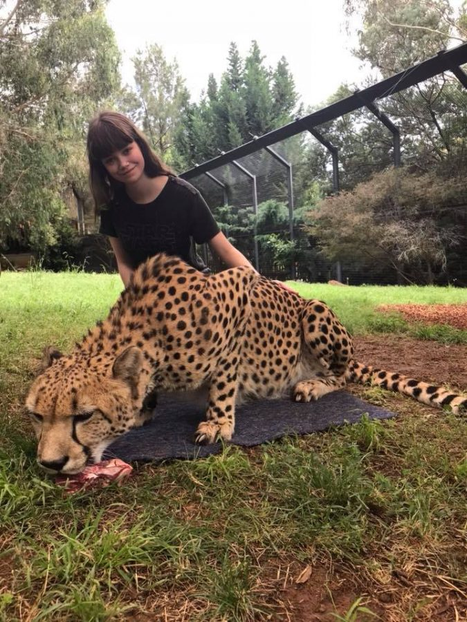 Sydney+Gazard+%E2%80%9920+poses+with+a+cheetah+during+her+trip+to+Australia.+