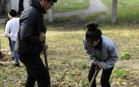 Fardin Chowdhury '21 and Anna Zhang '20 use shovels as they dig  a hole for their future tree.