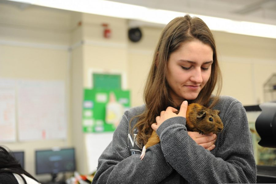 Animal+Behavior+also+allows+students+to+get+hands+on+experience%2C+by+allowing+them+to+interact+with+the+many+school+pets.