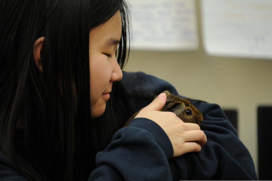 In this picture a student is holding a guinea pig in her arms.