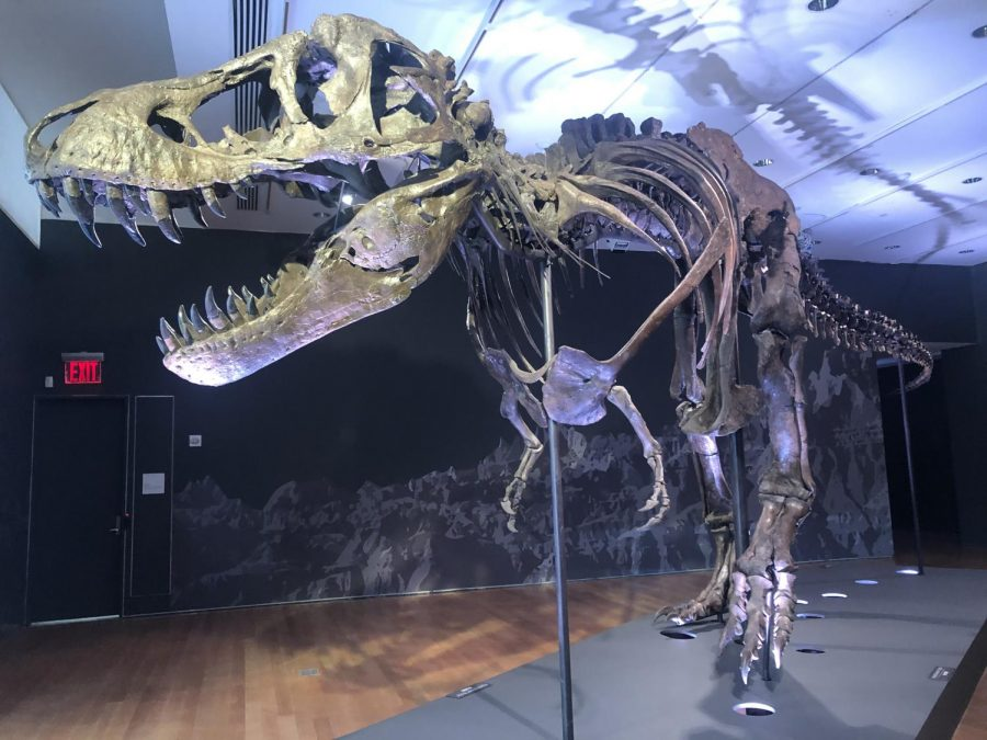 Stan's skeleton is one of the most complete Tyrannosaurus rex skeletons ever discovered.