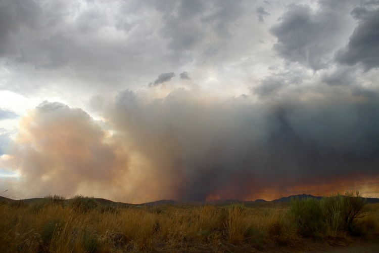 Wildfires in California, Oregon, and Washington in August through to December in 2020 alone cost $16.5 billion.