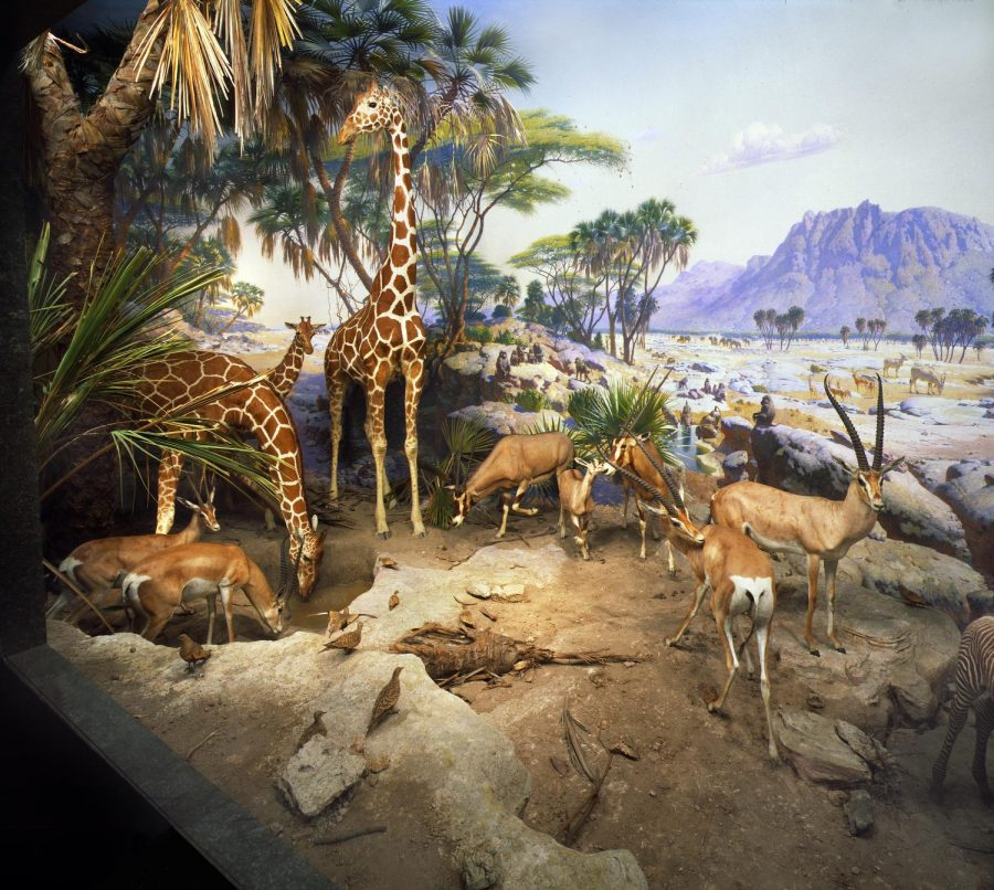 Here+is+the+Waterhole+diorama+by+William+R.+Leigh.+